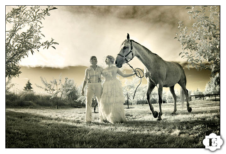 bride and groom with horse portrait