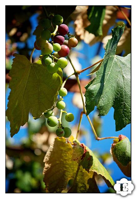 Oregon Vineyard Weddings