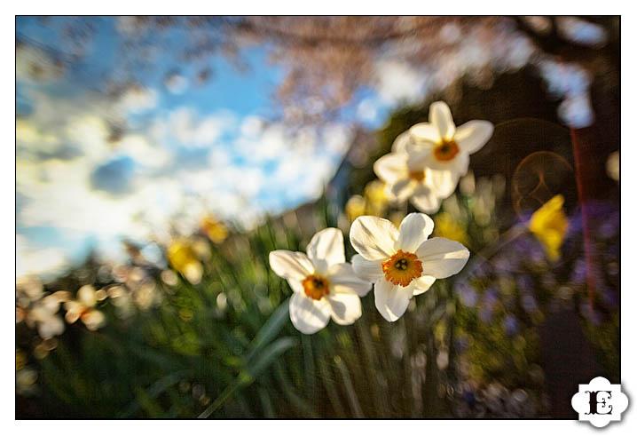 Portland Spring Portraits
