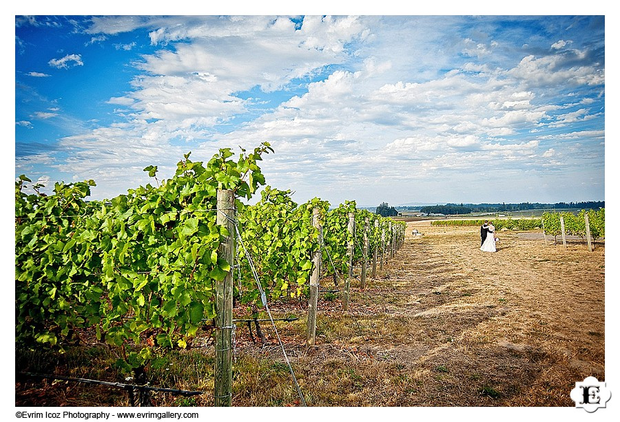 methven-family-vineyards